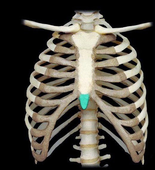 xiphoid process - pain, lump on the sternum, structure, treatment, Skeleton